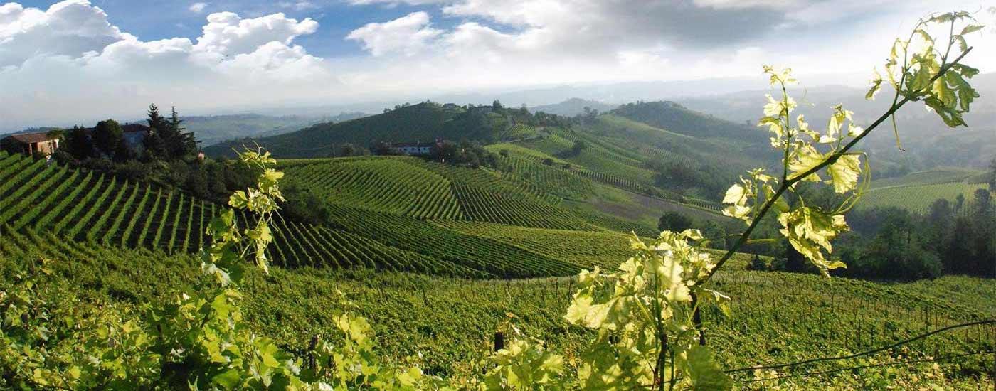 Wine Tour nel Chiantiin Mezza giornata