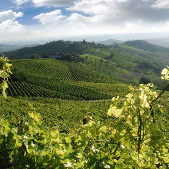 Wine Tour Mezza Giornata